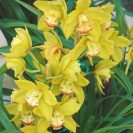 MelissaJoyBlogs_FlowerPower_051917_10