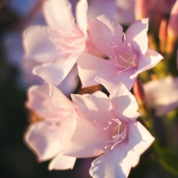 MelissaJoyBlogs_FlowerPower_051917_11