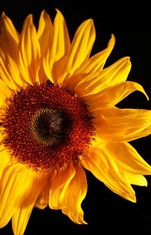 MelissaJoyBlogs_FlowerPower_051917_12